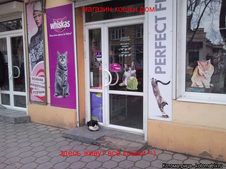 Котоматрица: магазин кошки дом  здесь живут все кошки =)