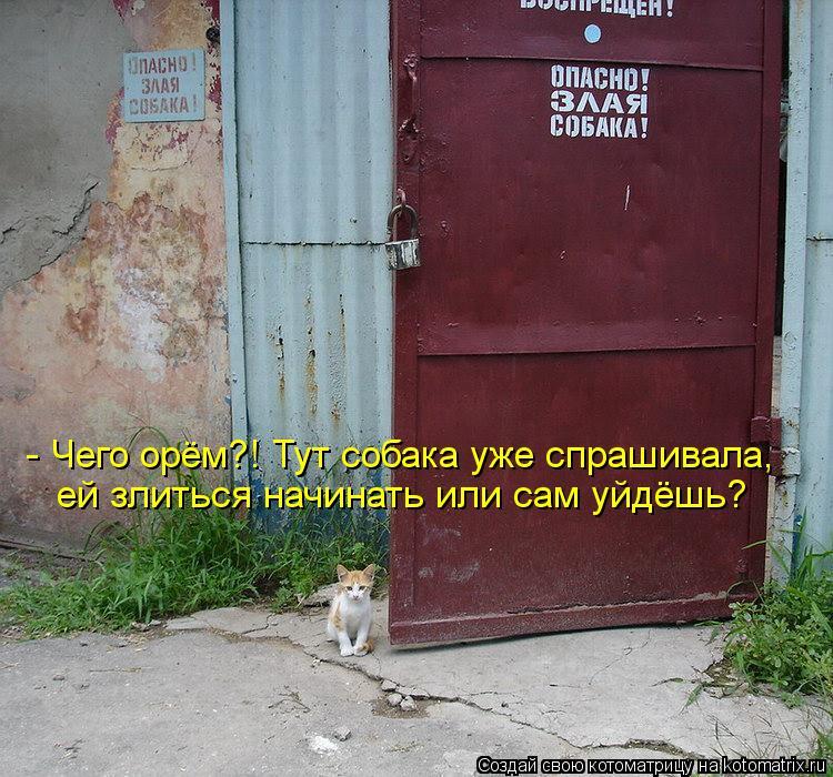 Котоматрица: - Чего орём?! Тут собака уже спрашивала, ей злиться начинать или сам уйдёшь?
