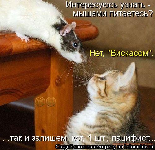 """Котоматрица: Интересуюсь узнать -  мышами питаетесь? Нет, """"Вискасом"""". ...так и запишем: кот, 1 шт., пацифист..."""