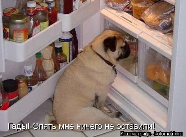 Котоматрица: Гады! Опять мне ничего не оставили!