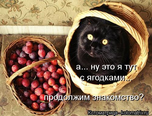Котоматрица: а... ну это я тут  а... ну это я тут  с ягодками... продолжим знакомство?