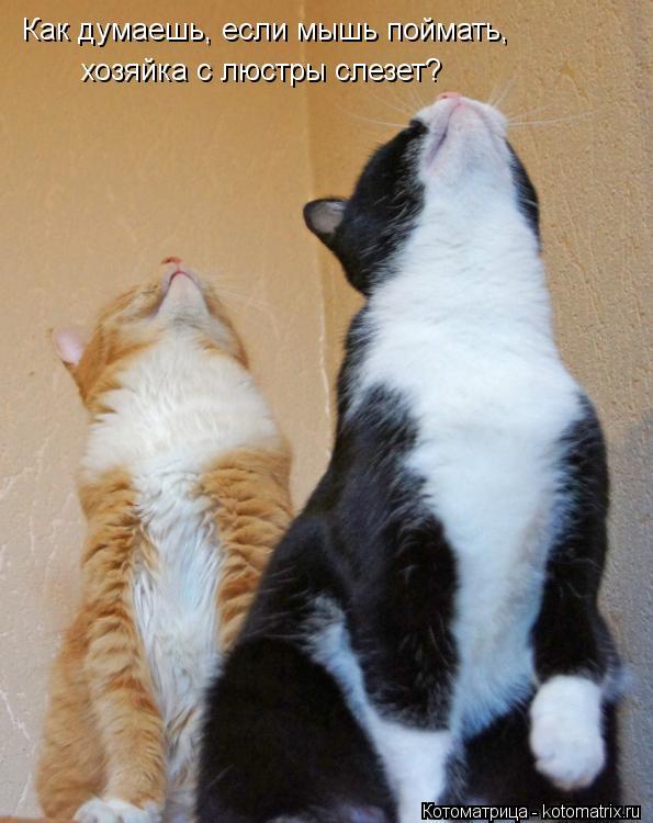 Котоматрица: Как думаешь, если мышь поймать,  хозяйка с люстры слезет?