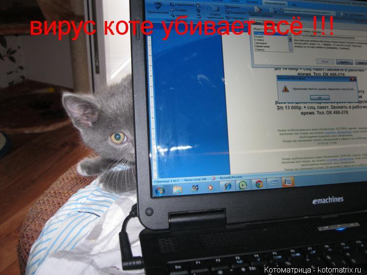 Котоматрица: вирус коте убивает всё !!!