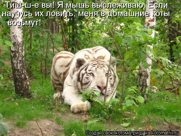Котоматрица: Тиш-ш-е вы! Я мышь выслеживаю. Если  научусь их ловить, меня в домашние коты  возьмут!