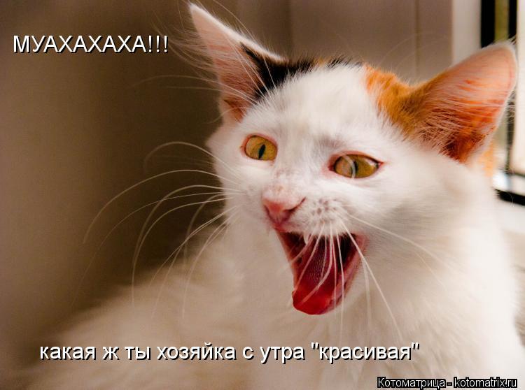 """Котоматрица: МУАХАХАХА!!! какая ж ты хозяйка с утра """"красивая"""""""