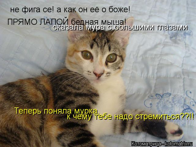 Котоматрица: не фига се! а как он её о боже!  ПРЯМО ЛАПОЙ бедная мыша! сказала мура с большими глазами Теперь поняла мурка, к чему тебе надо стремиться??!!