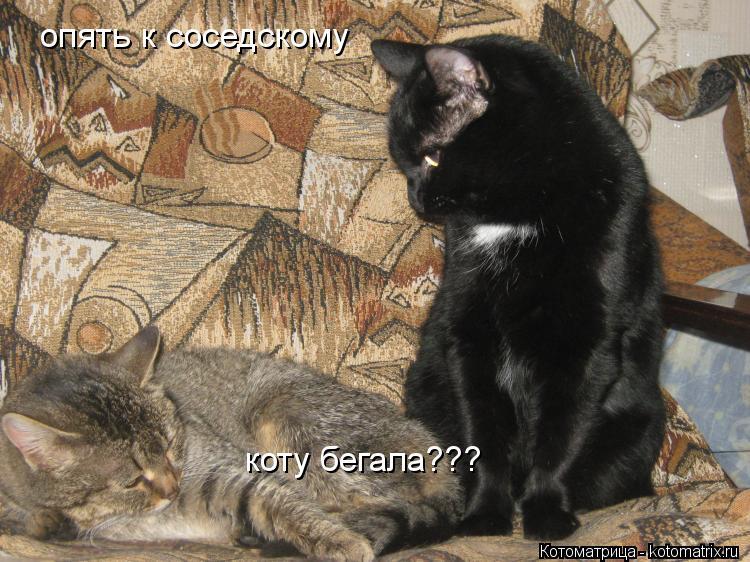 Котоматрица: опять к соседскому коту бегала???