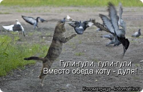Котоматрица: Гули-гули, гули-гули Вместо обеда коту - дуля!