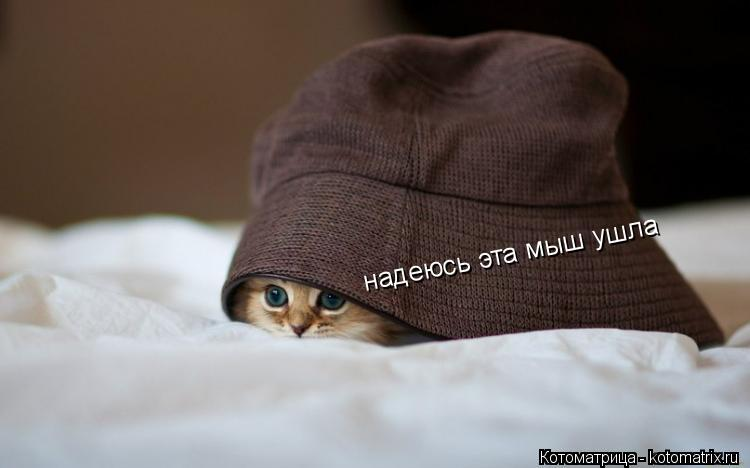 Котоматрица: надеюсь эта мыш ушла