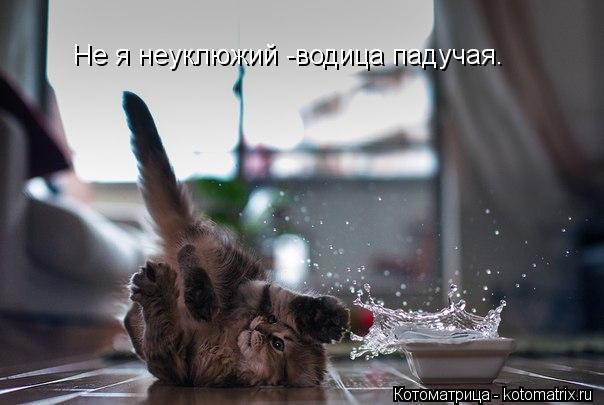 Котоматрица: Не я неуклюжий -водица падучая.