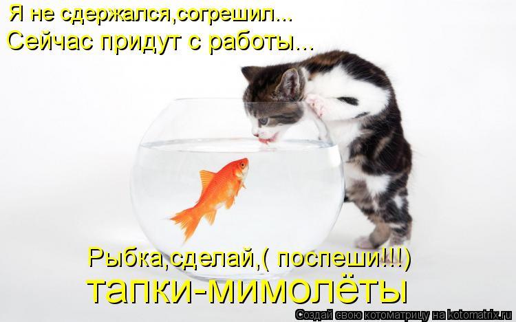 Котоматрица: Я не сдержался,согрешил... Сейчас придут с работы... Рыбка,сделай,( поспеши!!!) тапки-мимолёты