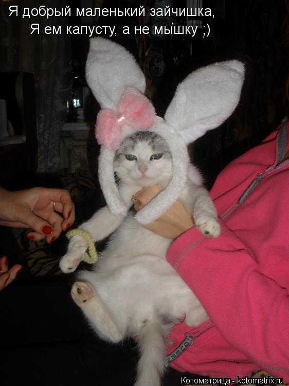 Котоматрица: Я добрый маленький зайчишка, Я ем капусту, а не мышку ;)