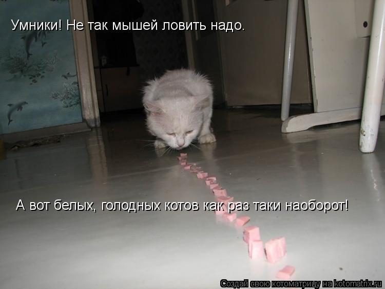Котоматрица: Умники! Не так мышей ловить надо. А вот белых, голодных котов как раз таки наоборот!