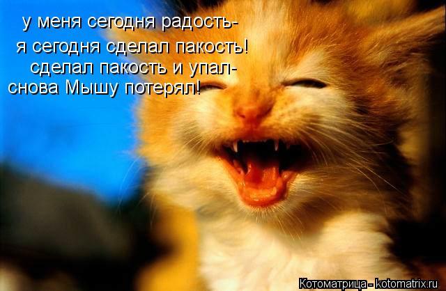 Котоматрица: у меня сегодня радость- я сегодня сделал пакость! сделал пакость и упал- снова Мышу потерял!