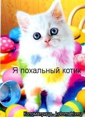 Котоматрица: Я похальный котик