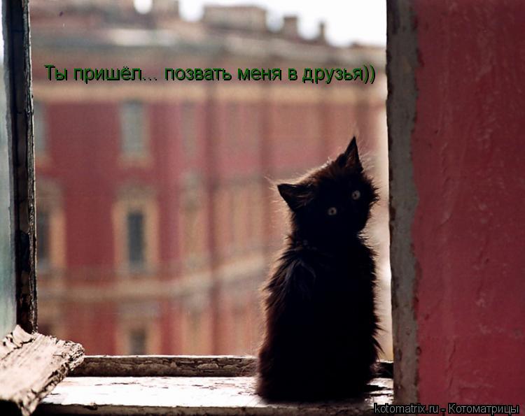 Котоматрица: Ты пришёл... позвать меня в друзья))