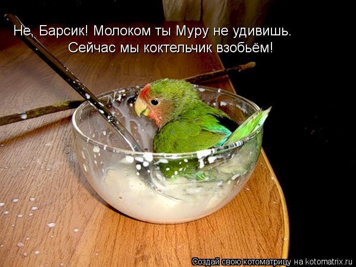 Котоматрица: Не, Барсик! Молоком ты Муру не удивишь. Сейчас мы коктельчик взобьём!