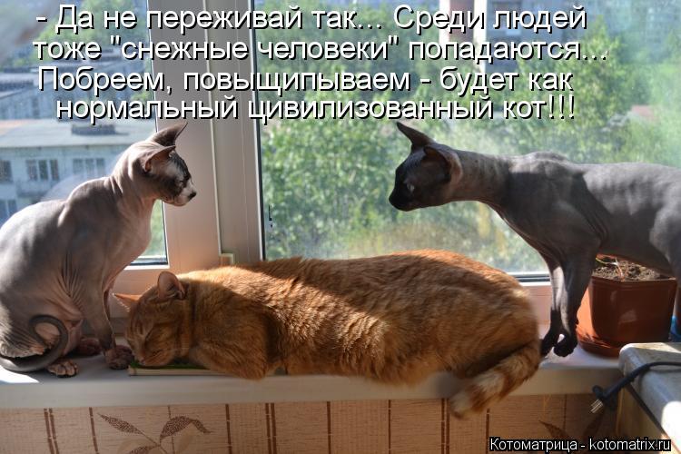 """Котоматрица: - Да не переживай так... Среди людей тоже """"снежные человеки"""" попадаются... Побреем, повыщипываем - будет как нормальный цивилизованный кот!!!"""