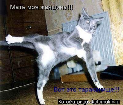 Котоматрица: Мать моя женщина!!! Вот это тараканище!!!