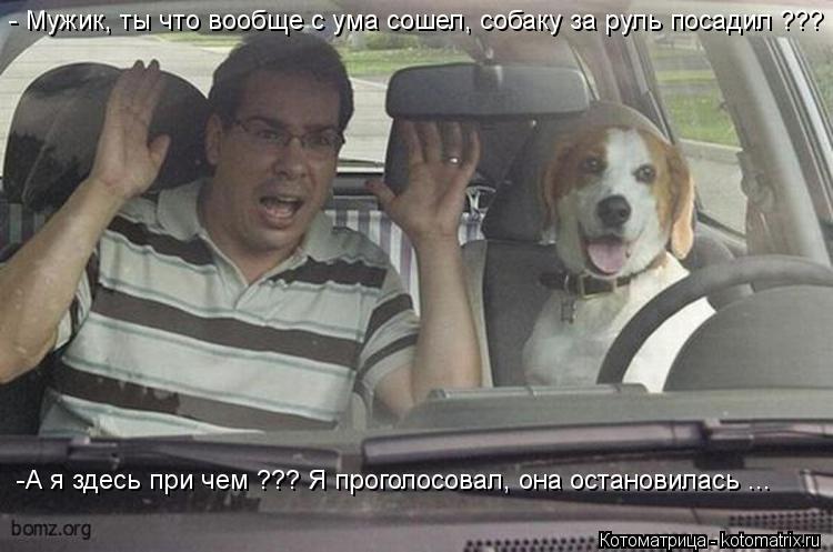 Котоматрица: - Мужик, ты что вообще с ума сошел, собаку за руль посадил ???   -А я здесь при чем ??? Я проголосовал, она остановилась ...