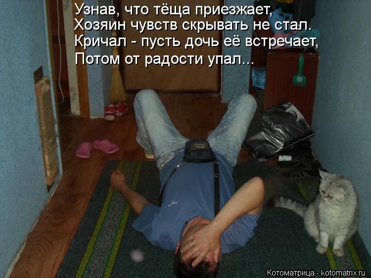 Котоматрица: Узнав, что тёща приезжает, Хозяин чувств скрывать не стал. Кричал - пусть дочь её встречает, Потом от радости упал...