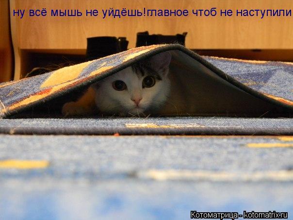 Котоматрица: ну всё мышь не уйдёшь!главное чтоб не наступили!
