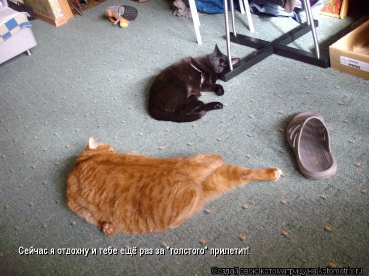 """Котоматрица: Сейчас я отдохну и тебе ещё раз за """"толстого"""" прилетит!"""