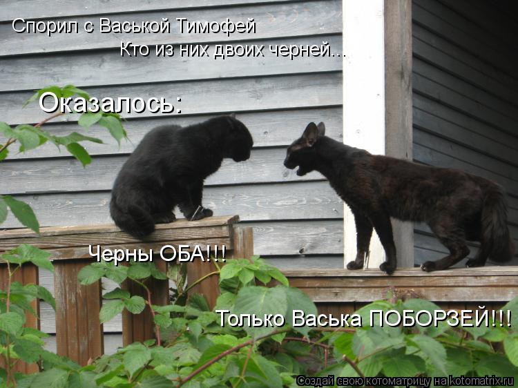 Котоматрица: Спорил с Васькой Тимофей Кто из них двоих черней... Оказалось: Черны ОБА!!! Только Васька ПОБОРЗЕЙ!!!