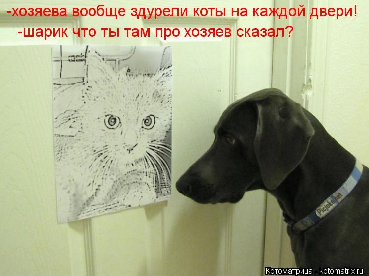Котоматрица: -хозяева вообще здурели коты на каждой двери! -шарик что ты там про хозяев сказал?
