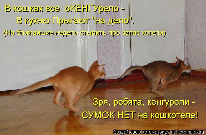 """Котоматрица: В кошках все  оКЕНГУрело -  (На ближайшие недели стырить про запас хотели). Зря, ребята, кенгурели -  СУМОК НЕТ на кошкотеле! В кухню Прыгают """"на"""