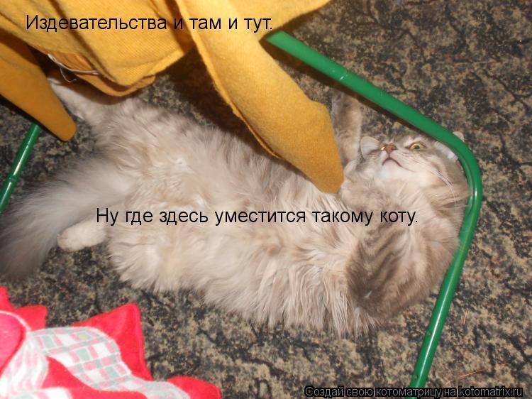 Котоматрица: Издевательства и там и тут. Ну где здесь уместится такому коту.