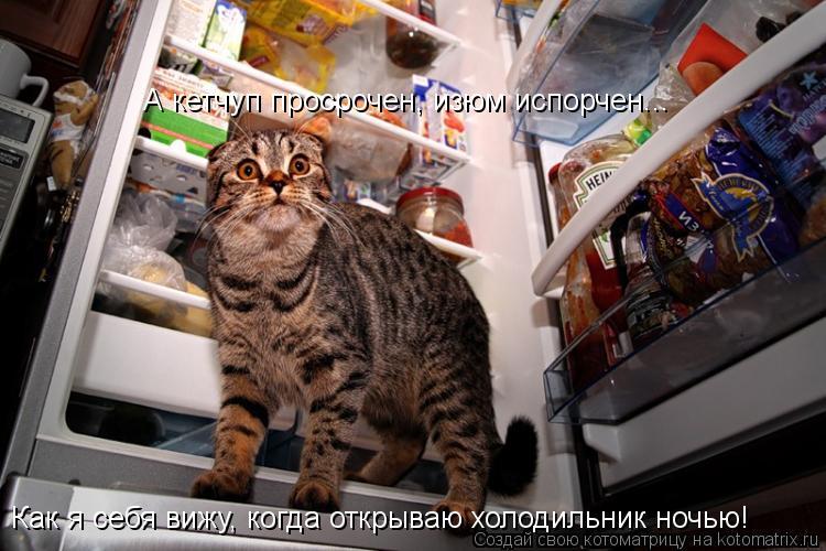 Котоматрица: Как я себя вижу, когда открываю холодильник ночью! А кетчуп просрочен, изюм испорчен...