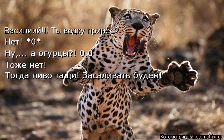 Котоматрица: Василиий!!! Ты водку принес? Нет! *0* Ну,... а огурцы?! 0.0 Тоже нет! Тогда пиво тащи! Засаливать будем!