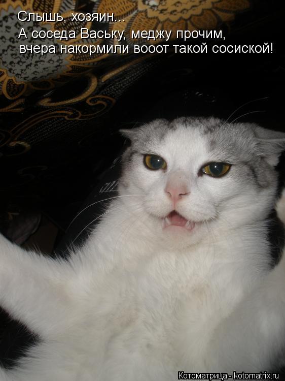 Котоматрица: вчера накормили вооот такой сосиской! А соседа Ваську, меджу прочим, Слышь, хозяин...