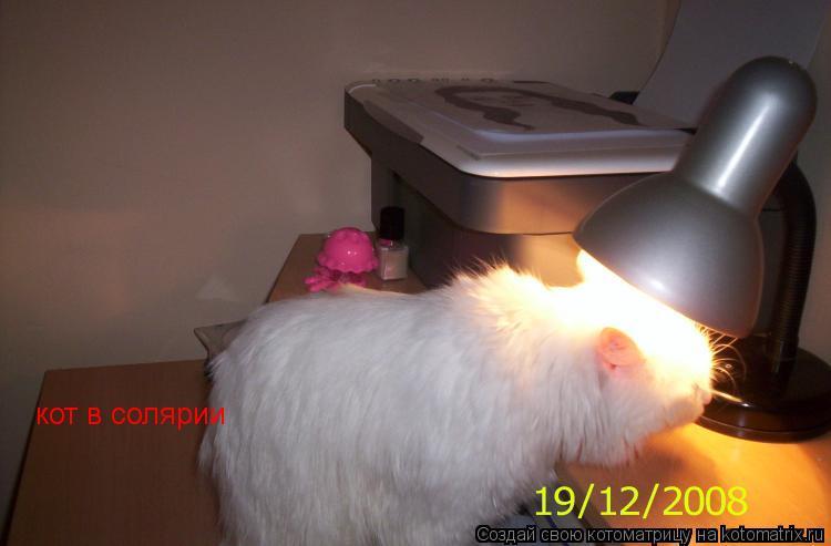 Котоматрица: кот в солярии