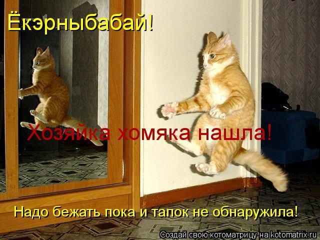 Котоматрица: Ёкэрныбабай! Хозяйка хомяка нашла! Надо бежать пока и тапок не обнаружила!
