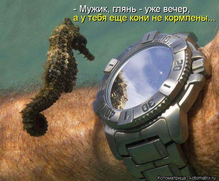 Котоматрица: - Мужик, глянь - уже вечер,  а у тебя еще кони не кормлены...