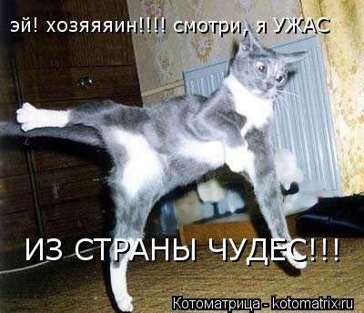Котоматрица: эй! хозяяяин!!!! смотри, я УЖАС  ИЗ СТРАНЫ ЧУДЕС!!!