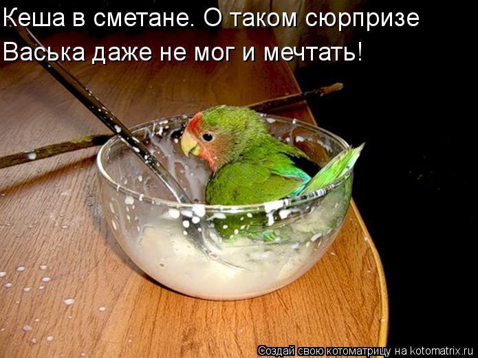 Котоматрица: Кеша в сметане. О таком сюрпризе Васька даже не мог и мечтать!