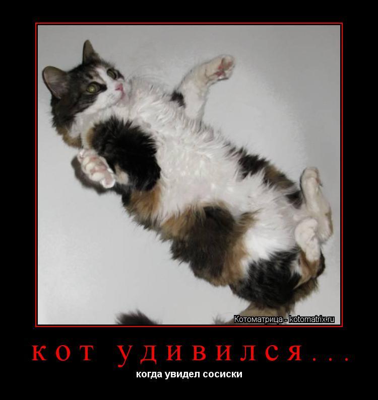 Котоматрица: кот удивился... когда увидел сосиски