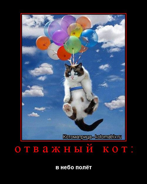 Котоматрица: отважный кот: в небо полёт