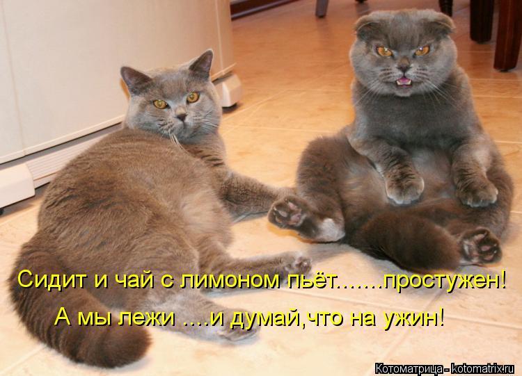 Котоматрица: Сидит и чай с лимоном пьёт.......простужен! А мы лежи ....и думай,что на ужин!