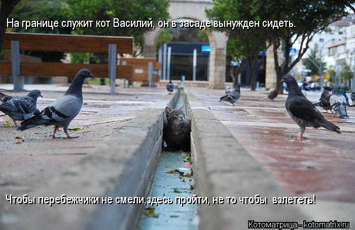 Котоматрица: На границе служит кот Василий, он в засаде вынужден сидеть. Чтобы перебежчики не смели,здесь пройти, не то чтобы  взлететь!