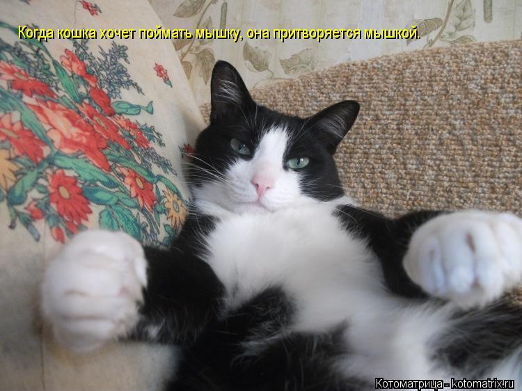 кошка в перчатках не ловит мышей нет