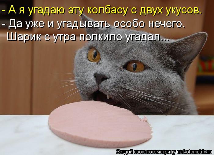 Котоматрица: - А я угадаю эту колбасу с двух укусов. - Да уже и угадывать особо нечего. Шарик с утра полкило угадал...