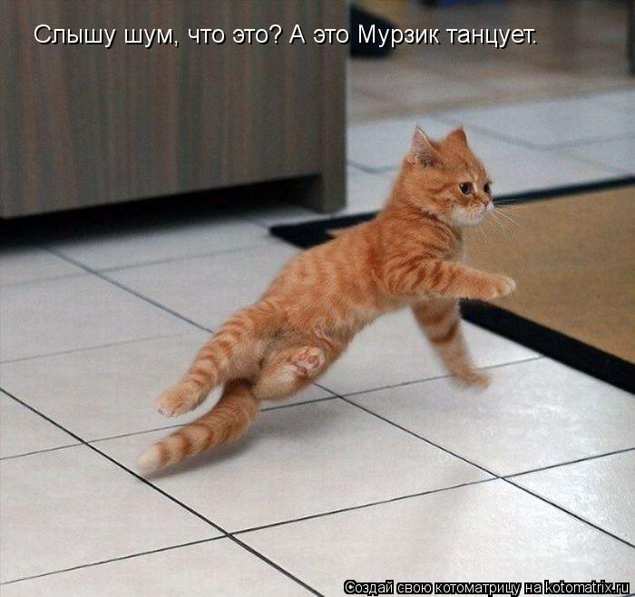Котоматрица: Слышу шум, что это? А это Мурзик танцует.