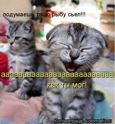Котоматрица: ааааааааааааааааааааааааааааааааааа как ты мог! подумаешь твою рыбу сьел!!!