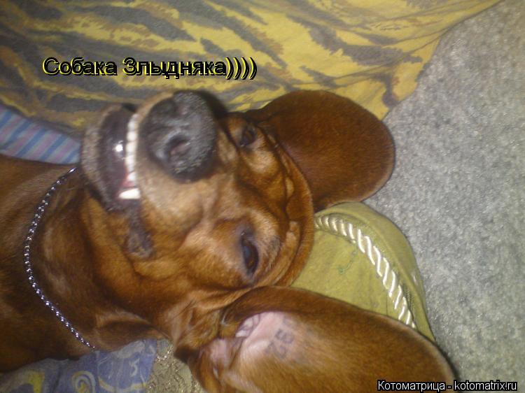 Котоматрица: Собака Злыдняка)))) Собака Злыдняка)))) Собака Злыдняка)))) Собака Злыдняка))))