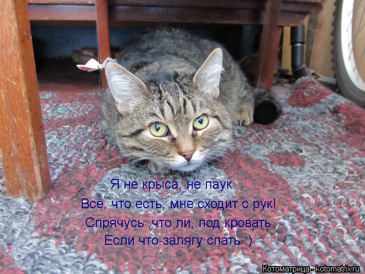 Котоматрица: Я не крыса, не паук Всё, что есть, мне сходит с рук! Спрячусь ,что ли, под кровать Если что-залягу спать :)