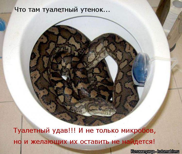 Котоматрица: Туалетный удав!!! И не только микробов, но и желающих их оставить не найдется! Что там туалетный утенок...